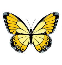 63 best yellow butterflies images on butterflies