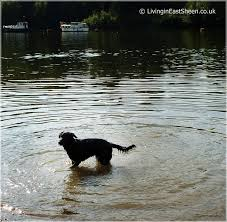 thames river boats dogs 51 best thames riverside walk petersham to richmond images on