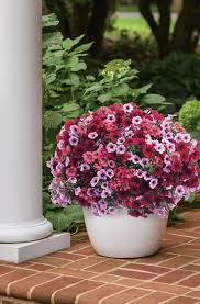 Flowering Patio Plants 11 Best Top 10 Plants For Your Area Images On Pinterest Flower