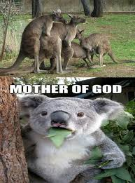Kangaroo Meme - mother of kangaroo funny pictures quotes memes funny images
