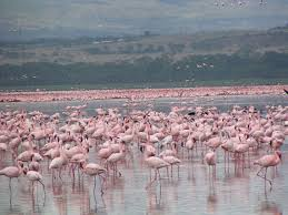 10 most beautiful and interesting places to visit in kenya