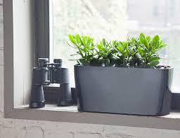 Indoor Decorative Trees For The Home 10 Best Indoor Plants For Men Gear Patrol