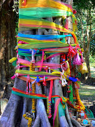 ribbon trees a gallery on flickr