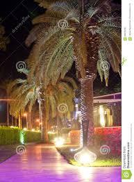 palm trees walking paths with night illumination on territory