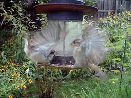 rainydaygarden wingscapes birdcam and birdcam pro inthewild by