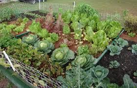 Small Home Garden Ideas Beautiful Inspiration Small Vegetable Garden Ideas For A Margarite