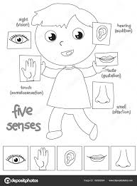 Garçon de cinq sens Coloriage illustration  Image vectorielle