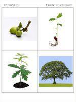 montessori tree printable 89 best learning montessori botany images on pinterest botany