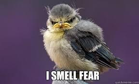 Fear Meme - i smell fear piemelmees quickmeme