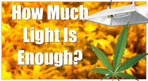 plant light for weed cannabis lighting distance question how much light is enough
