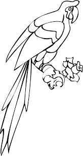 parrots coloring pages long tail parrot coloring page download u0026 print online coloring