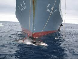 Southern Ocean Map Whaling Off The Map Global Fishing Watch Blog