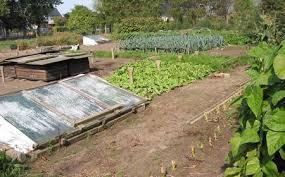 Benefits Of Urban Gardening - the multiple benefits of urban gardens cascina triulza