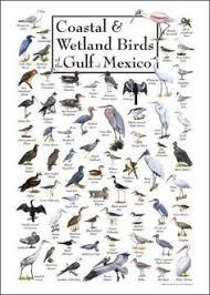 Florida Backyard Birds - backyard birds of southeast 360 512 second grade pinterest