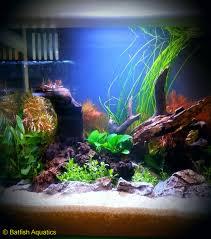 batfish aquatics aquarium design and aquascaping