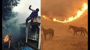 Wildfire Deaths Per Year by Wildfires In Napa Santa Rosa Sonoma California Canyon County Yuba