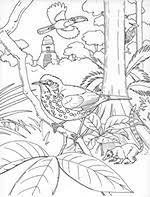 coloring book pages smithsonian migratory bird center