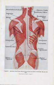 Anatomy Of Human Back Muscles Anatomy Organ Pictures Human Anatomy Back Muscles Latest