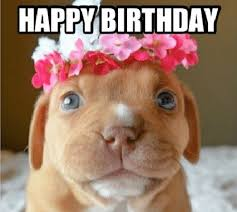 Birthday Meme Dog - happy birthday memes dog wishesgreeting