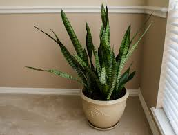 Air Purifying Plants 9 Air 9 houseplants that clean the air and are almost impossible to kill