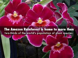 native plants in the amazon rainforest amazon rainforest by 543318