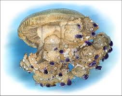 jellyfish full color u0026 line art illustrations at inkart net
