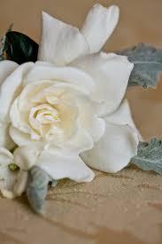 13 best gardenias images on pinterest gardenia tattoo gardenias