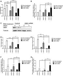 ubiquitination of basal vegfr2 regulates signal transduction and