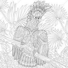 cockatoo parrot coloring book page zentangle doodle