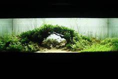 Aquascaping World Pavel Bautin U0027s Revolutionary Winning Scape An Underwater Forest