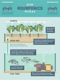aquaponics the cost effective cyclical way to raise fish and