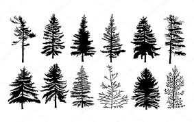 set of different silhouettes of pine trees stock vector