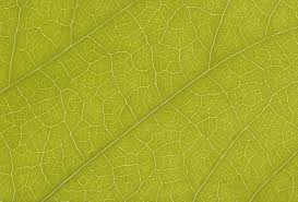 free stock leaf textures cg textures free download leaf