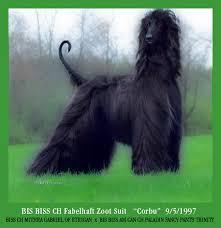 afghan hound puppies ohio fabelhaft fabelhaft robobull french bulldogs