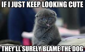 Funny Memes Cats - 20 hilarious cat memes you need to see popthatcollar com