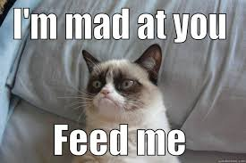 Im Mad At You Meme - grumpy cat memes quickmeme