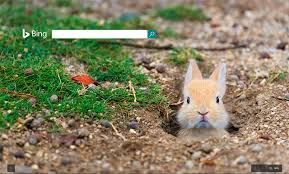 theme google chrome rabbit no easter logo from google again but bing ask com have easter themes
