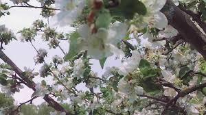 beautiful spring youtube