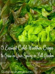 912 best growing vegetables images on pinterest growing
