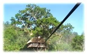 Building A Zip Line In Your Backyard by Backyard Zip Lines U2013 Tree House Accessories