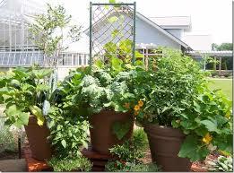 133 best garden images on pinterest gardening vegetable garden