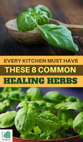 1067 best herbal and plants that heal images on pinterest