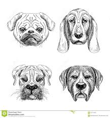 vector set of hand drawn animal sketch stock vector image 57650671