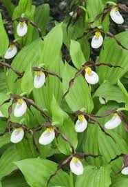 Tropical Rainforest Plant List - endangered tropical rainforest plants hunker
