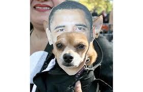 Chihuahua Halloween Costume Dogs Dressed Halloween Costumes Telegraph