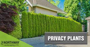 Create Privacy In Backyard Privacy Plants Northway Landscaping