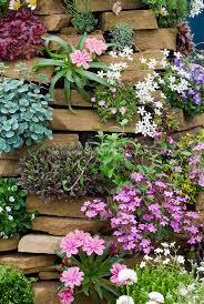 Rock Gardening Vertical Rock Gardening Plants In Bloom Plant Flower Stock