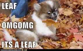 Fall Meme - i has a hotdog autumn funny dog pictures dog memes puppy