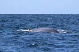 birdsong meets a blue whale and sings her kids song u201cso big blue