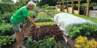 home no dig organic gardening